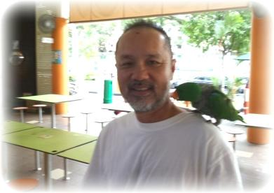 ang_parrot1PicsArt_1416617372386