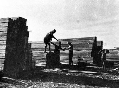 wood sawmill workers