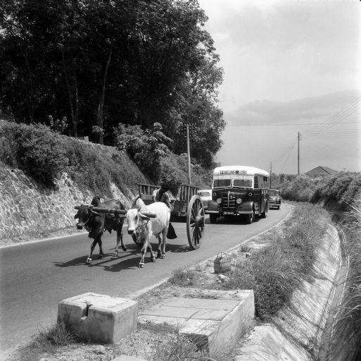 img0004_mule cart near serangoon gdn est 1956