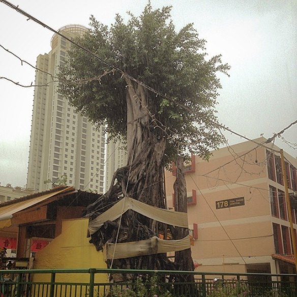 Toa-Payoh-Tree